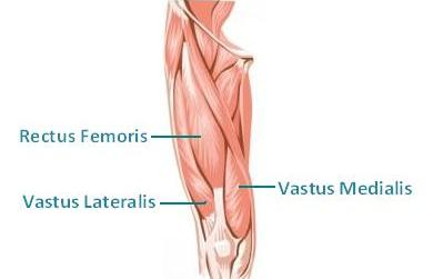 Knee Anatomy Pain Location