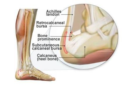 Ankle Bursa Diagram